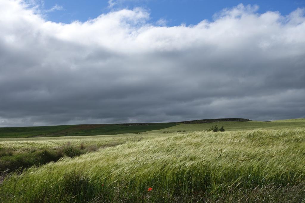 Wind and grain